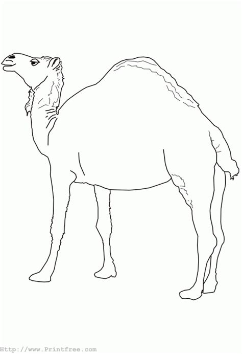 free coloring pages of camel mask
