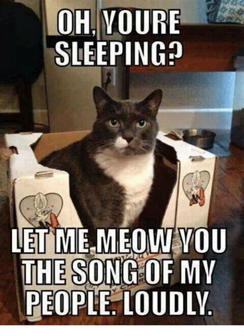 25 best memes about grumpy cat and sleeping grumpy cat