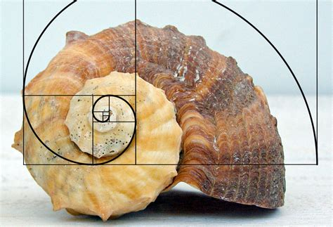 golden section nature the fibonacci fib richard nilsen