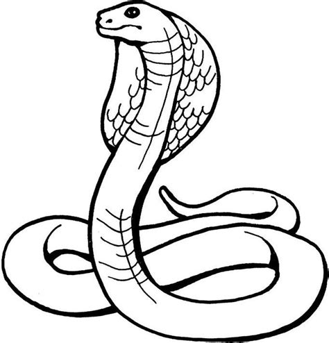 coloring pages of snake heads snake line drawing clipart best