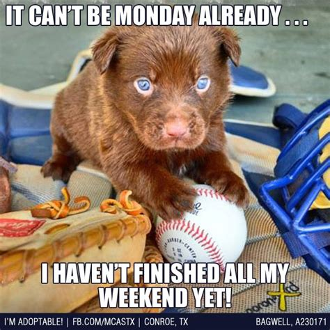 Monday Dog Meme - nothing ruins a good weekend better than monday funny