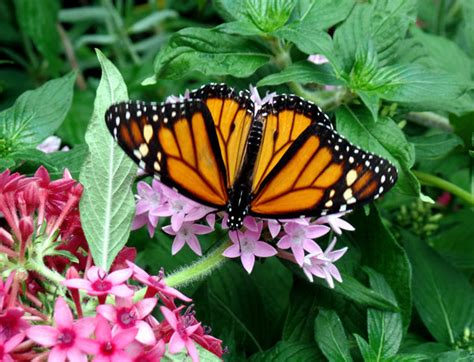 what colors attract butterflies san diego community news files exploring