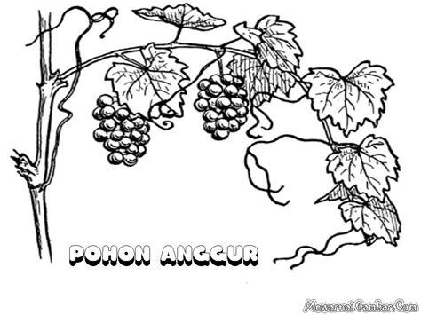 wallpaper daun anggur mewarnai gambar buah anggur mewarnai gambar
