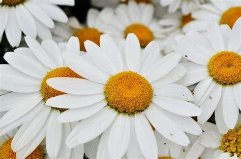 fiori matrimonio agosto fiori matrimonio agosto fiori per cerimonie fiori