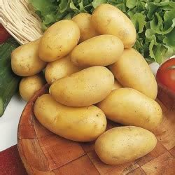 buy charlotte seed potatoes  marshalls seeds