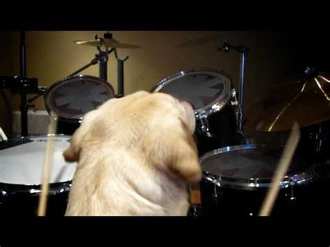 pugs and drummers pug the drummer covers metallica enter sandman doovi