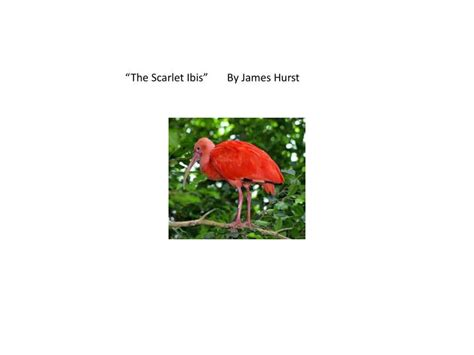 themes of scarlet ibis by james hurst ppt the scarlet ibis by james hurst powerpoint