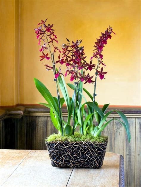 Design Beautiful Indoor Plants Ideas Tips For Beautiful Indoor Plants Orchid Care Interior Design Ideas Ofdesign