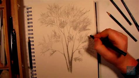 how to water a real tree how to draw a realistic tree