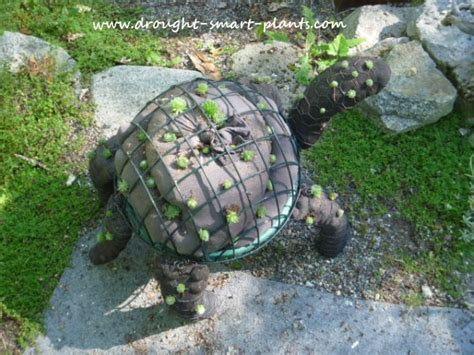 topiary turtle an amusing succulent garden craft