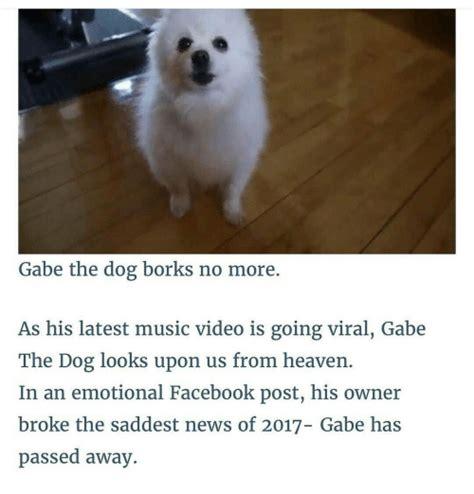 gabe the meme gabe the memes of 2017 on sizzle