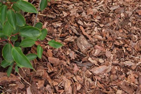 Pilze Im Garten Durch Rindenmulch by Rindenmulch Preise Und Anwendung Mulch