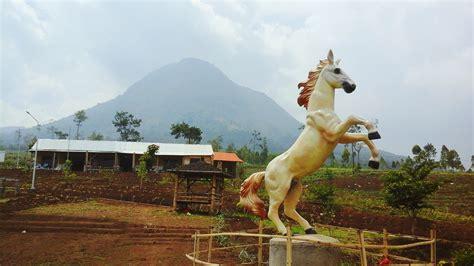 Sho Kuda Di Malang lokasi dan harga tiket masuk peternakan kuda megastar batu