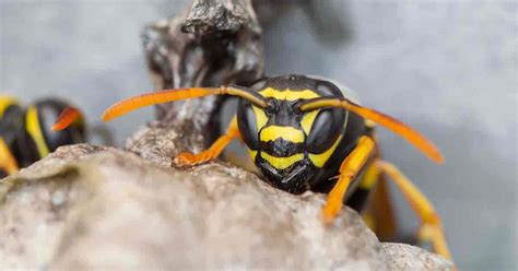 how to get rid of wasps in house siding how to get rid of wasps in my fireplace fireplaces