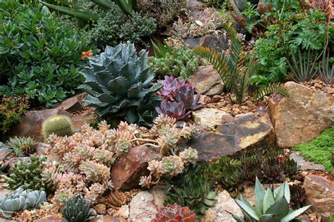 Succulent Rock Garden Succulent Rock Garden Ideas Photograph Rock Garden With Su