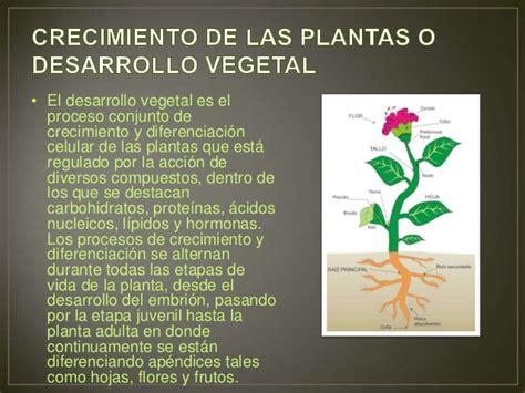 imagenes y frases de las etapas de la vida crecimiento de las plantas