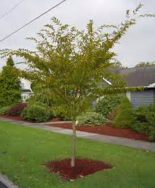 trees for small backyards landscaping landscaping small trees pictures