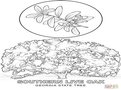 Explore Flower Coloring Pages Rhode Island And More Size Tree Coloring Page