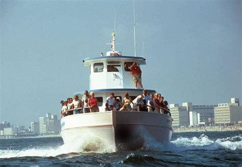 virginia aquarium dolphin watching boat trips gallagherstravels virginia beach is for water lovers