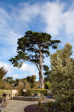 san fran botanical garden arboretum golden gate park garden plants things to do
