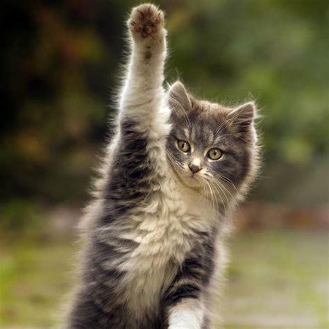 kısır kedi 8 patiliyo