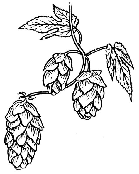 16 best images about hops and barley on pinterest beer