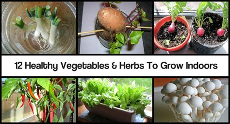 best herbs to grow indoors how to grow vegetables indoors table designs