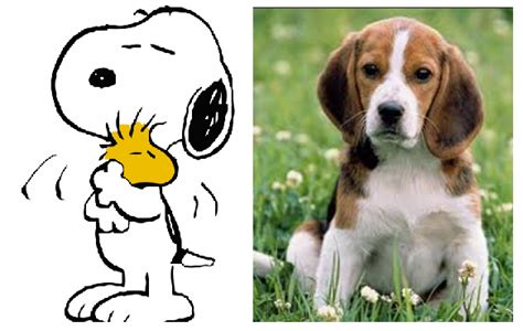 snoopy puppy what of is snoopy quora
