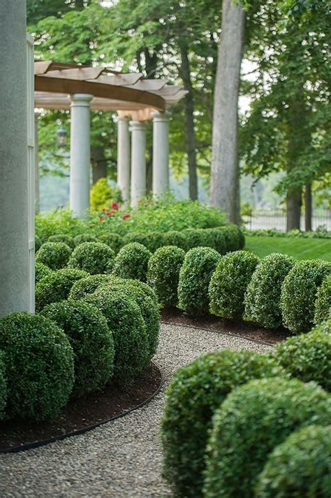hedging ideas for gardens 25 best ideas about boxwood hedge on hedges hedges landscaping and patio