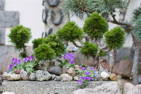 Steingarten Gestalten by Steingarten Gestalten Tipps F 252 R Das Eigene Steinbeet