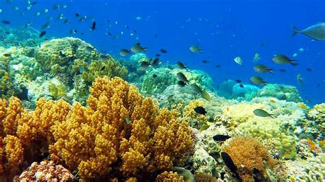 dive package bohol scuba diving packages alona panglao island bohol