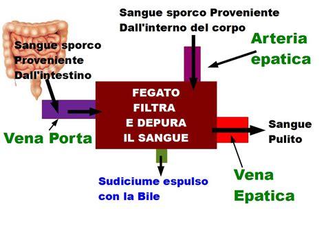 alimentazione fegato drenaggio epatico alimentazione e nutraceutica