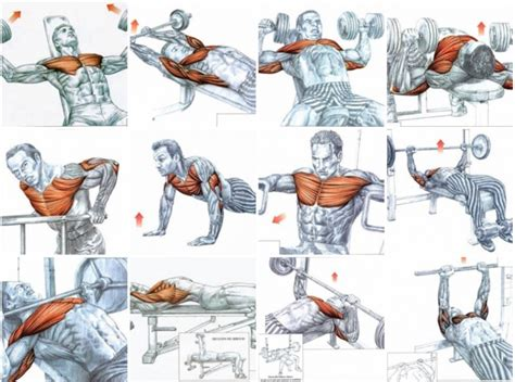Increase Your Bench Press Program Gain Chest Muscle Using Only 3 Super Effective Exercises