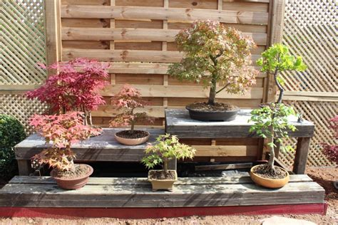 Formidable Video Bonsai Jardin Japonais #4: bonsai2.jpg