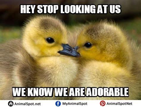 Ducks Meme - duck memes