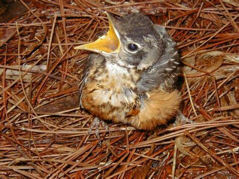 baby bird random photo 31829055 fanpop