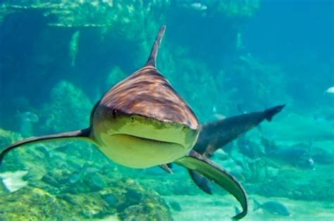 are sharks color blind are sharks color blind sciencedaily