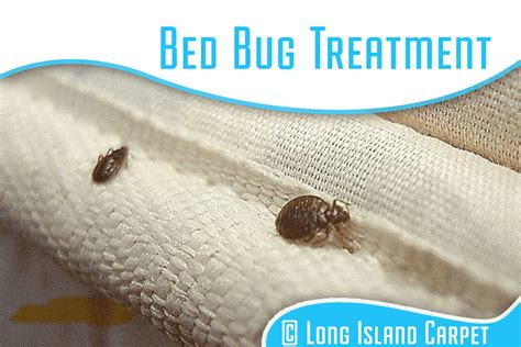 bed bug company long island carpet 20 off all cleaning services long