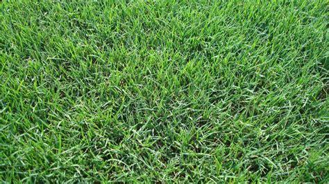 bermuda grass types pearland sugar land houston grass