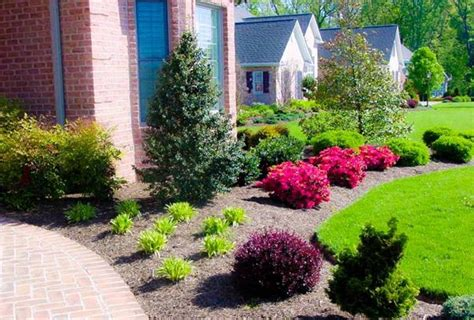 backyard trees and shrubs best landscaping plants and trees bistrodre porch and