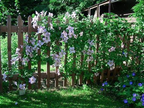 Kletterpflanzen Garten