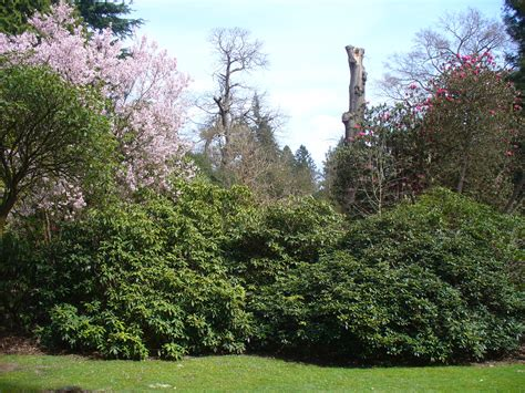 landscaping images file valley gardens landscape garden geograph org uk