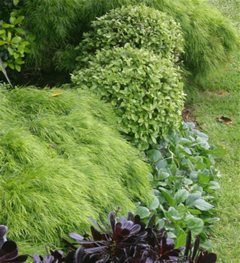 Go Gardening   Helping New Zealand Grow   Garden
