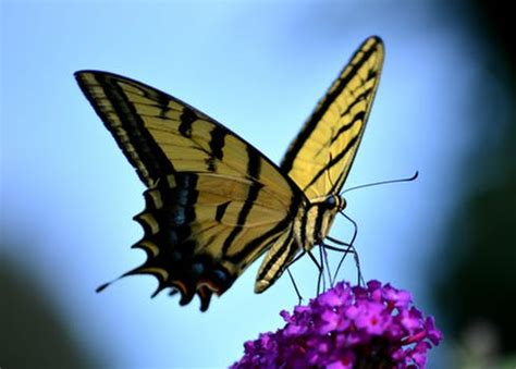 beautiful butterfly pictures pexels  stock