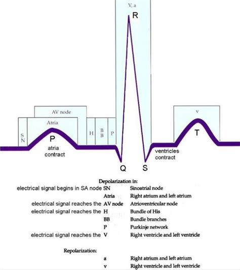 ecg pattern meaning repolarization vs depolarization before during and