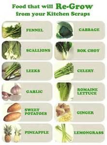 fennel scallions aka green onions leeks garlic