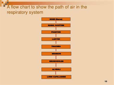 pathway of air o2 nose external nares nasal cavity respiratory system