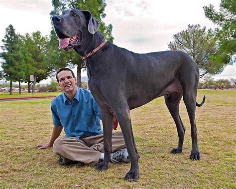 mujer con un perro mas grande no todas las personas que respiran est 225 n vivas george el