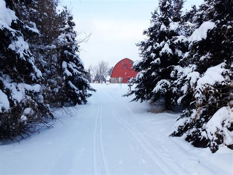 fun christmas tree places in se wisconsin palmquist farm travel wisconsin