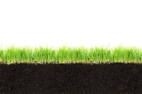 grass section cross section of soil and grass isolated on white